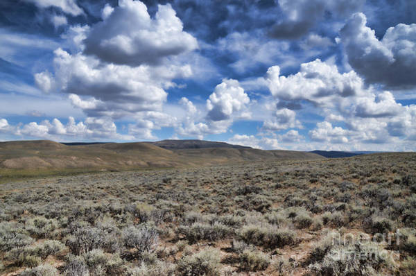 Photograph - Stormy Wyoming Sage Brush II by Donna Greene