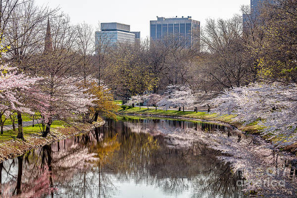 Photograph - Storrow Lagoon by Susan Cole Kelly