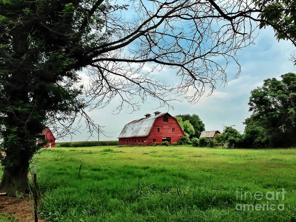 Photograph - Stovall Farms In The Mississippi Delta by T Lowry Wilson