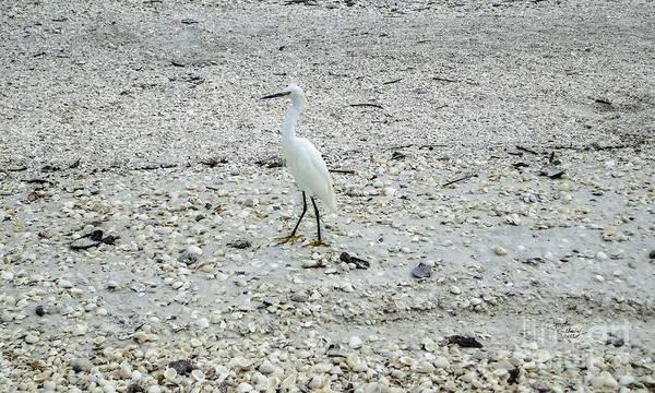 Photograph - Strange Bird by Ginette Callaway