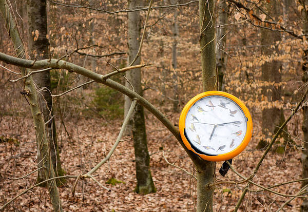 Photograph - Strange Find In The Forest - Orange Clock Hanging On Tree by Matthias Hauser