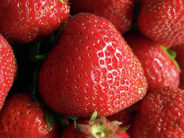British Food Photograph - Strawberries by Ian Gowland/science Photo Library