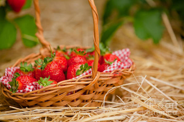 Wall Art - Photograph - Strawberries In A Wicker Basket by Simon Bratt Photography LRPS