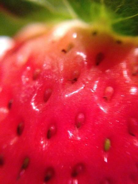 Photograph - Strawberry Delight by Marian Palucci-Lonzetta