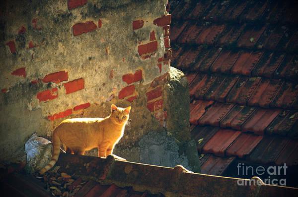 Homeless Photograph - Stray Cat by Carlos Caetano