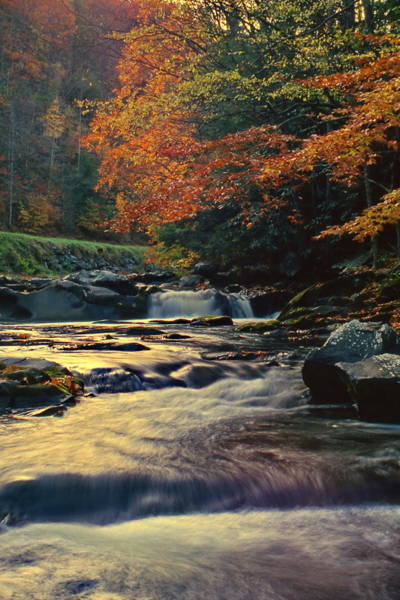 Photograph - Stream At Evening by Harold Rau