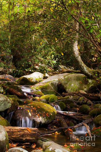 Wall Art - Photograph - Stream At Roaring Fork by Lena Auxier