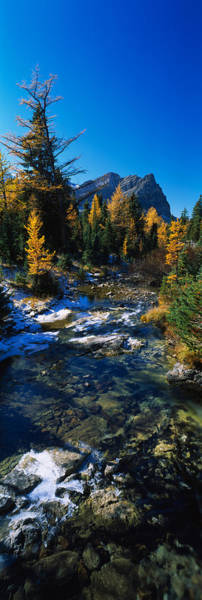 Continental Divide Photograph - Stream Flowing In A Forest, Mount by Panoramic Images