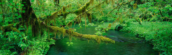 Wall Art - Photograph - Stream Flowing Through A Rainforest by Panoramic Images