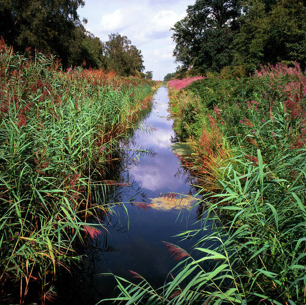Wall Art - Photograph - Stream In A Nature Reserve by Robert Brook/science Photo Library