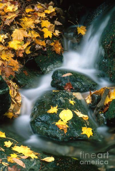 Photograph - Stream In Autumn by George Ranalli