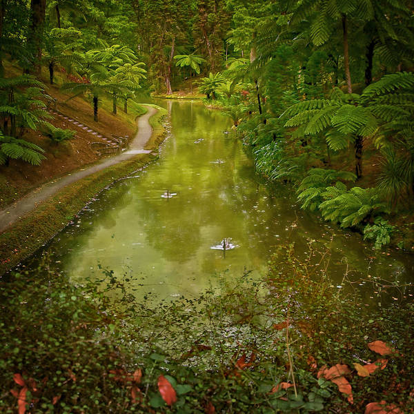 Photograph - Stream In Paradise by Eduardo Tavares