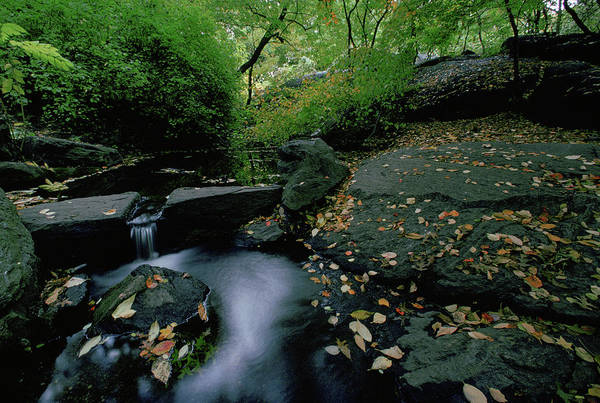 Wall Art - Photograph - Stream In The Bramble In Central Park by Jose Azel