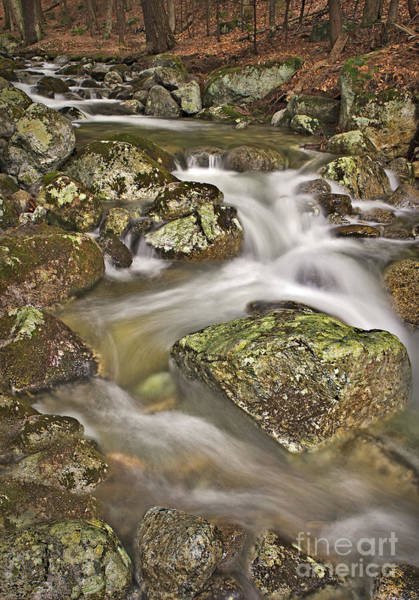 Photograph - Stream by Susan Candelario