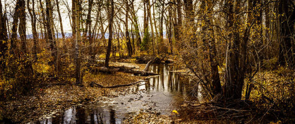 Photograph - Stream Through A Wood Lot by TL  Mair