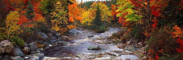 Peacefulness Photograph - Stream With Trees In A Forest by Panoramic Images