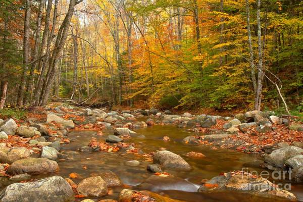 Photograph - Streaming Through The White Mountains by Adam Jewell