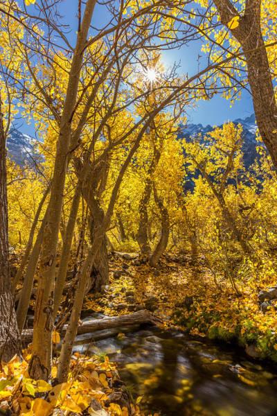 Photograph - Streams Of Gold by Tassanee Angiolillo