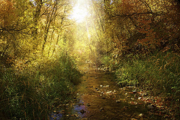 Photograph - Streams Of Light by Ramona Murdock