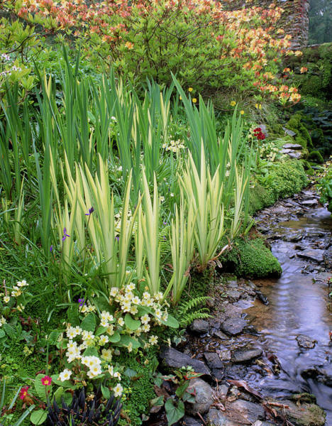 Horticulture Photograph - Streamside Planting by Geoff Kidd/science Photo Library