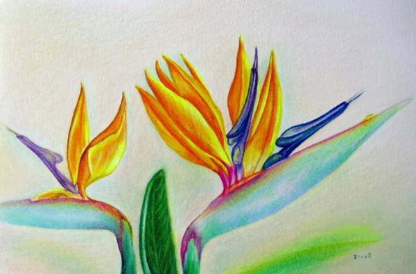 Garden Wall Drawing - Strelitzia - Together by Zina Stromberg