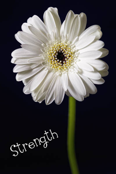 Photograph - Strength by Kim Andelkovic