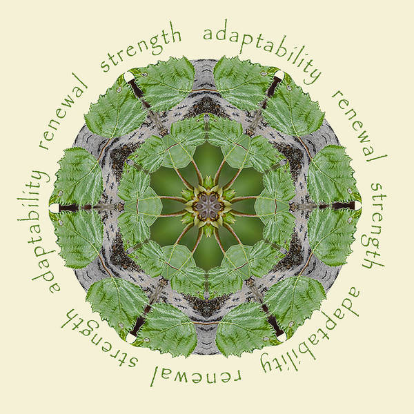 Strength Mandala 1 Art Print