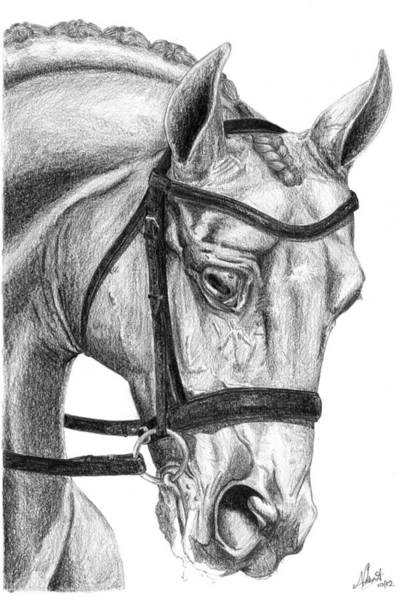 Warmbloods Drawing - Stressage by Naydia Kent