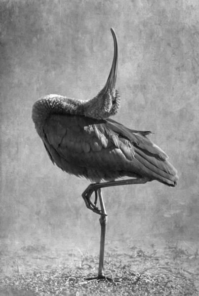 Bird Strike Wall Art - Photograph - Strike A Pose by Angie Vogel