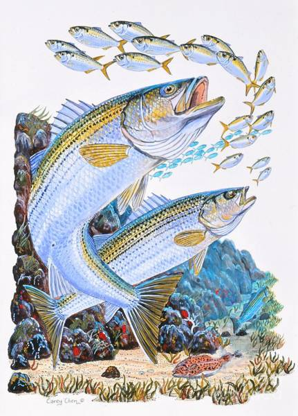 Reel Painting - Striped Bass Rocks by Carey Chen