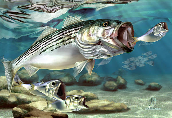 Sealife Painting - Striper - The True Monster Of Montauk by Hayden Hammond