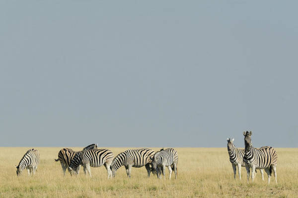 Horizontal Stripes Photograph - Stripes And Gold by Johann Van Heerden
