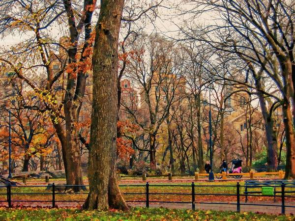 Photograph - Stroll In The Park by Carlos Diaz
