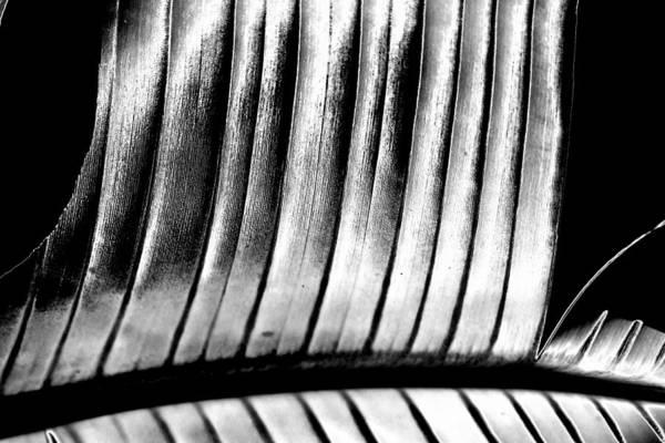Photograph - Strong Lines by Louis Dallara