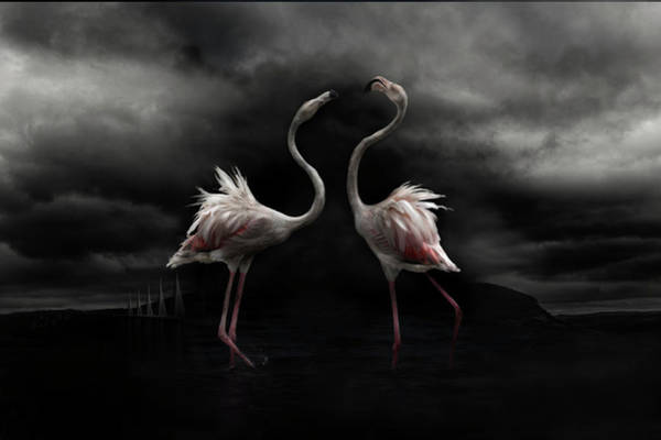 Flamingos Wall Art - Photograph - Strong Temperament by Martine Benezech