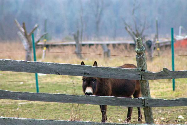 Wall Art - Photograph - Stubborn As A Mule by Rhonda Humphreys