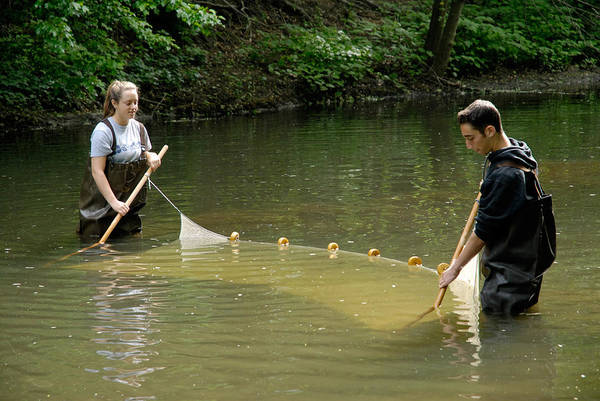 Wall Art - Photograph - Students Using A Seine Net To Sample by Martin Shields