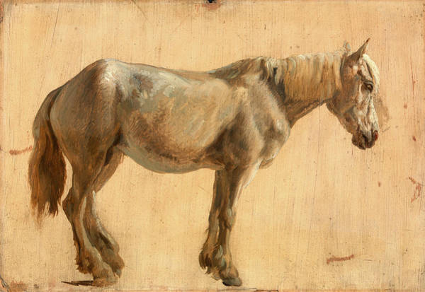 Wall Art - Painting - Study Of A Grey Horse, Jacques-laurent Agasse by Litz Collection