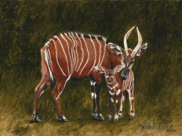 Critically Endangered Wall Art - Painting - Study Of A Mountain Bongo by Dreyer Wildlife Print Collections