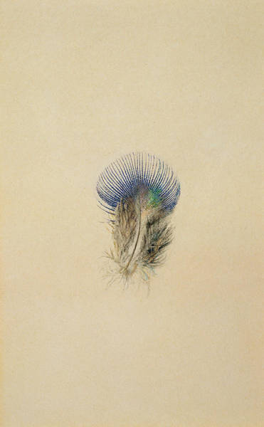 Exotic Drawing - Study Of A Peacock Feather, 1873 by John Ruskin