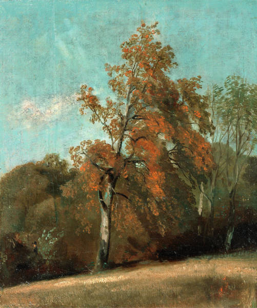 Ashes Painting - Study Of An Ash Tree, John Constable, 1776-1837 by Litz Collection