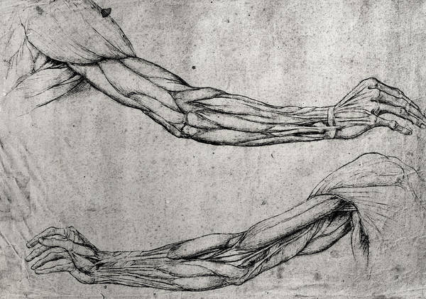 Ink Pen Drawing - Study Of Arms by Leonardo Da Vinci