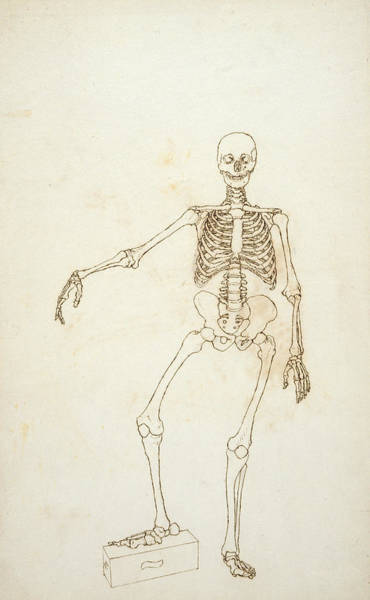 Ribcage Photograph - Study Of The Human Figure, Anterior View, From A Comparative Anatomical Exposition Of The Structure by George Stubbs