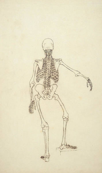 Ribcage Photograph - Study Of The Human Figure, Posterior View, From A Comparative Anatomical Exposition by George Stubbs