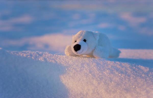 Fake Photograph - Stuffed Toy Of Polar Bear On Snow by Keren Su