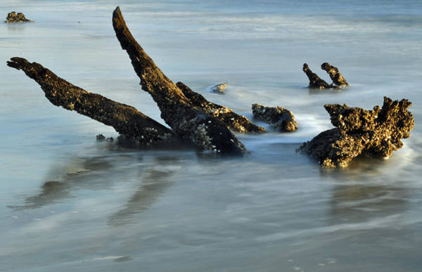 Photograph - Stumps In The Ocean 1.1 by Bruce Gourley