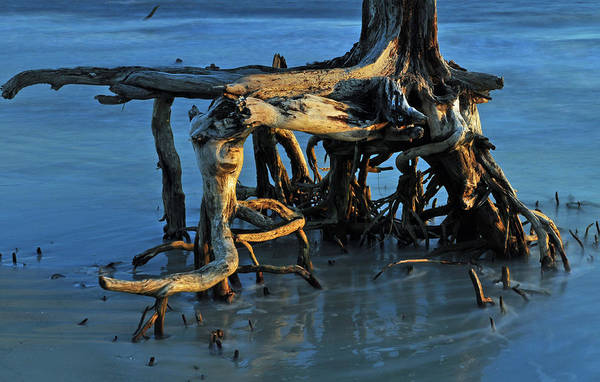 Photograph - Stumps In The Ocean 1.2 by Bruce Gourley