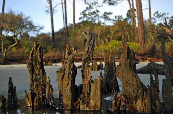 Photograph - Stumps On The Beach 1.1 by Bruce Gourley