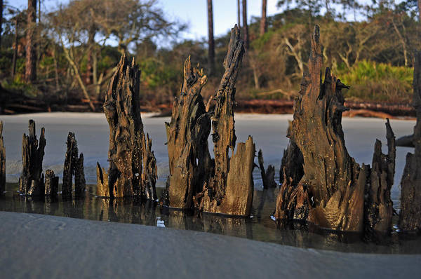 Photograph - Stumps On The Beach 1.2 by Bruce Gourley