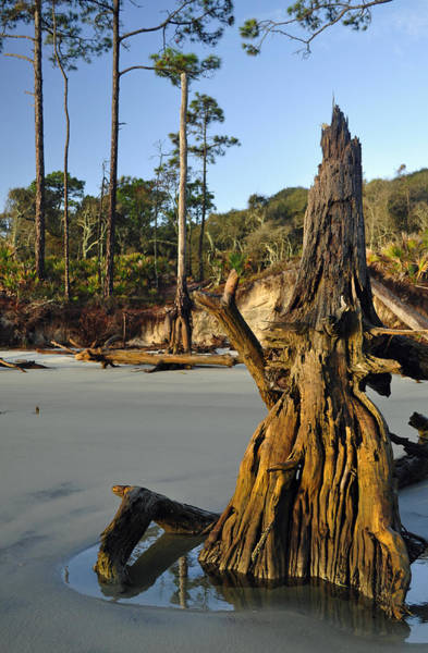 Photograph - Stumps On The Beach 1.3 by Bruce Gourley